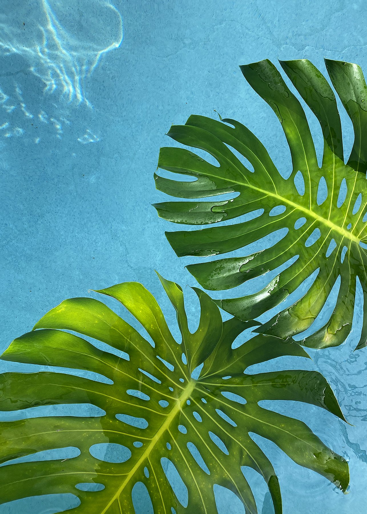 Palm Leaves and Water